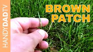 Brown Patch Dollar Spot Treatment Lawn Care 2018