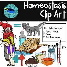 What Is Homeostasis In Biology Biology Clip Art Homeostasis By The Weird Science Teacher Tpt