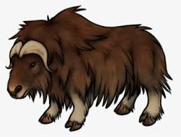 Choose your favorite ox drawings from millions of available designs. Musk Ox Drawing At Getdrawings Musk Ox Transparent Background Hd Png Download Kindpng