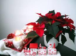 Weihnachtssterne Pflanzenklick