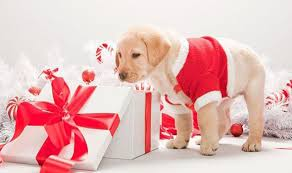 Christmas gifts for your pets: dog crackers, animal stockings and tasty  treats   Style   Life & Style   Express.co.uk