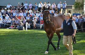 Image result for nsw stallion parades