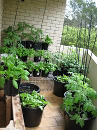 Kitchen Gardening Tips Apartment Plants Tips Small Balcony Garden Ideas You Should Look