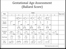 Image Result For Ballard Scale Infant Collection