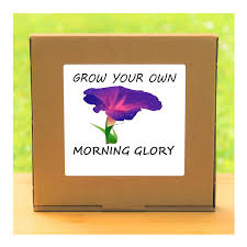 gardening gift grow your own morning glory plant kit unusual gift for men women him or her
