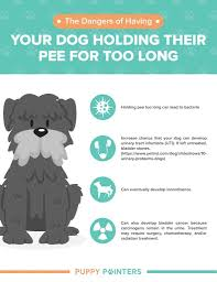 Puppy Bathroom Chart How Long Can A Dog Hold Its Pee