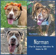 Image of: Lansing Photo De Ingham County Animal Control And Shelter Facebook Ingham County Animal Control And Shelter Publications Facebook