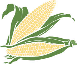 ear of corn clipart. Contemporary Corn Throughout Ear Of Corn Clipart N
