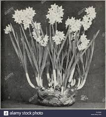 White Paper Flower Bulbs Autumn Edition 1924 Our New Guide To Rose Culture Winter