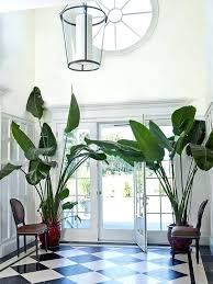 house plant looks like palm tree best indoor palm trees ideas on palm house plants artificial indoor plants and plants for room palm tree houseplant uk