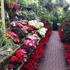 garden centers chicago home design ideas and pictures