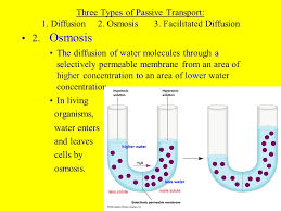 3 Types Of Passive Transport Chapter 8 Cells Their Environment Ppt Video Online Download