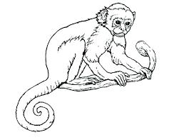 Monkey Printable Coloring Pages Monkey Free Printable Monkey