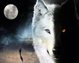 black wolf and white wolf love. Modren White Half Black White Wolf And Black Love K