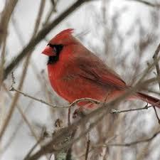 Eight Common Winter Backyard BirdsBackyard Bird Watch