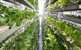 Urban Farming Design 13 Vertical Farming Innovations That Could Revolutionize