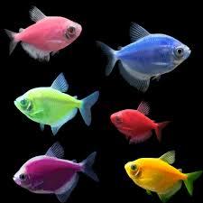 petco glofish. Exellent Petco Inside Petco Glofish