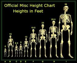 The Ideal Height To Be For Aesthetics Bodybuilding Com Forums