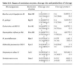 Restriction Enzyme 5 Main Enzymes Involved In Genetic Engineering Biotechnology