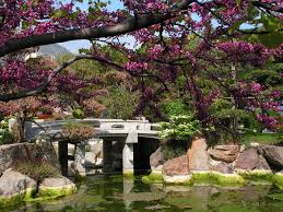 Lawn & Garden:Create an Authentic Oriental Garden in Your Backyard Beautiful  Japanese Garden Design