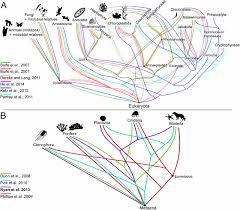 Synthesis Of Phylogeny And Taxonomy Into A Comprehensive Tree Of
