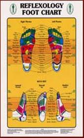 Reflexology Charts Key Elements In The Ear Hand Foot