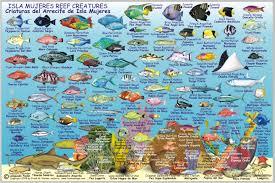 Isla Mujeres Fish Card Frankos Fabulous Maps Of Favorite