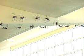ants in bathroom. Small Ants In House Tiny Kitchen Bathroom  Adorable