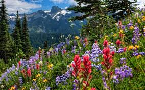 Spring In The Mountains Wallpaper (64+ images)