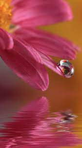 Beautiful Flower Water Drop Wallpaper ...