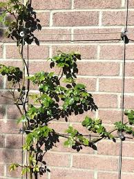 green wall wire trellis kits wire design stainless steel garden within diy trellis on brick wall