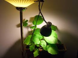 lighting for houseplants. World Seed Supply\u0027s Cheap And Simple Lighting Options For Indoor Plants Houseplants
