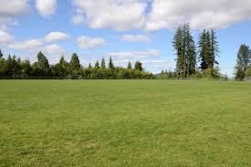 grass field. Field Images \u0026 Videos Grass