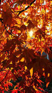 Free Autumn Wallpaper and Fall ...