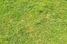 grass field texture. Green Grass Texture Field