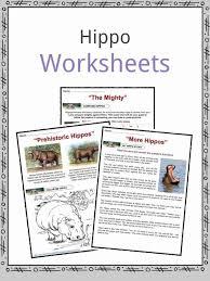 Hippopotamus Facts, Worksheets & Information for Kids