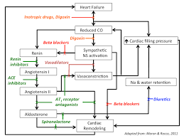 Pathophysiology Of Chf Treatment_of_heart_failure Tusom Pharmwiki