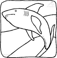 1001 Kleurplaten Dieren Haai Kleurplaat Haai