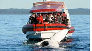 Business Petition To Support Whale Watching Industry | Rockhampton ...