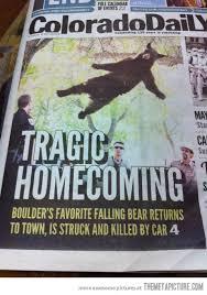 Nooo! R.I.P falling bear meme - The Meta Picture via Relatably.com