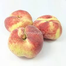 saturn donut peach