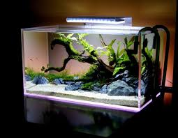 fish tank lighting ideas. clean and bright but with greenery where fish can hide i like it tank lighting ideas h