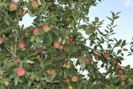How To Grow Apple Trees  Stark Brou0027sWhen Do You Plant Fruit Trees