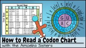 Codon Chart Video Companion Answer Key By The Amoeba Sisters Answer Key