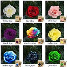 aquatica enterprises rose plant flower seeds 9 diffe colors 5 seeds each 45 seeds amazon in garden outdoors