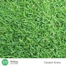 carpet grass. loading zoom. image 1. carpet grass seed r