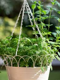 hanging herb baskets how to make an