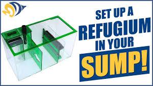 Refugium Sump Design How To Set Up A Refugium Inside Your Sump