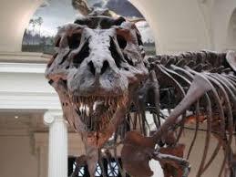<b>Tyrannosaurus Rex</b> for Kids: Learn about the giant <b>dinosaur</b> predator.