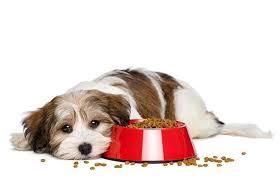 Por qué mi perro no quiere comer?
